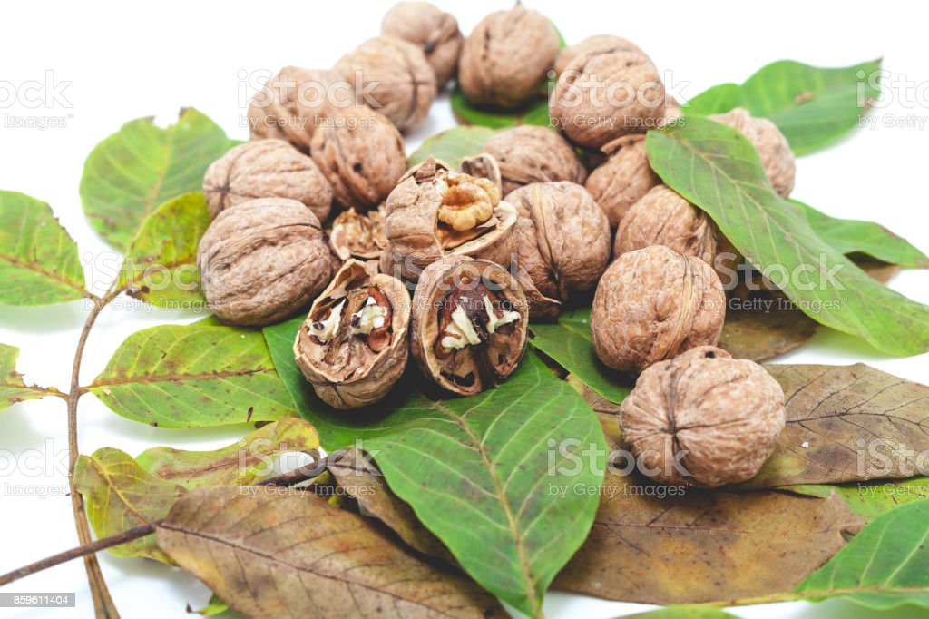 pile of walnuts lie on top of leaves on white stock photo