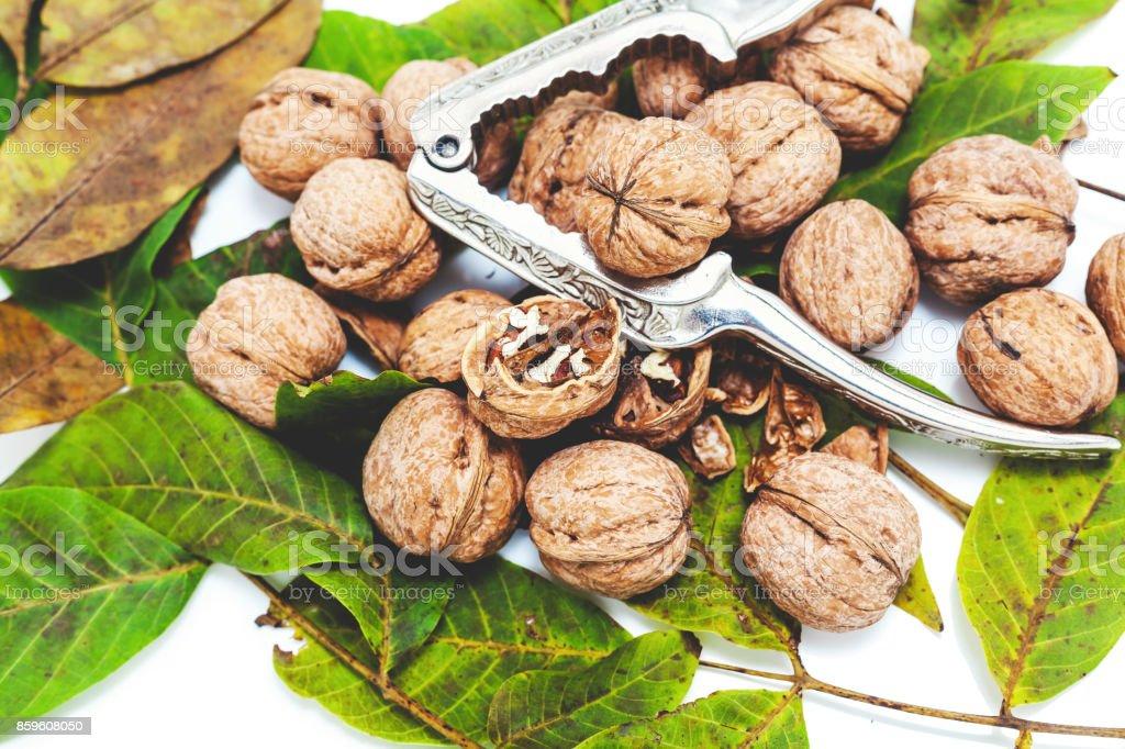 pile of walnuts lying on leaves. Near metal Nutcracker stock photo