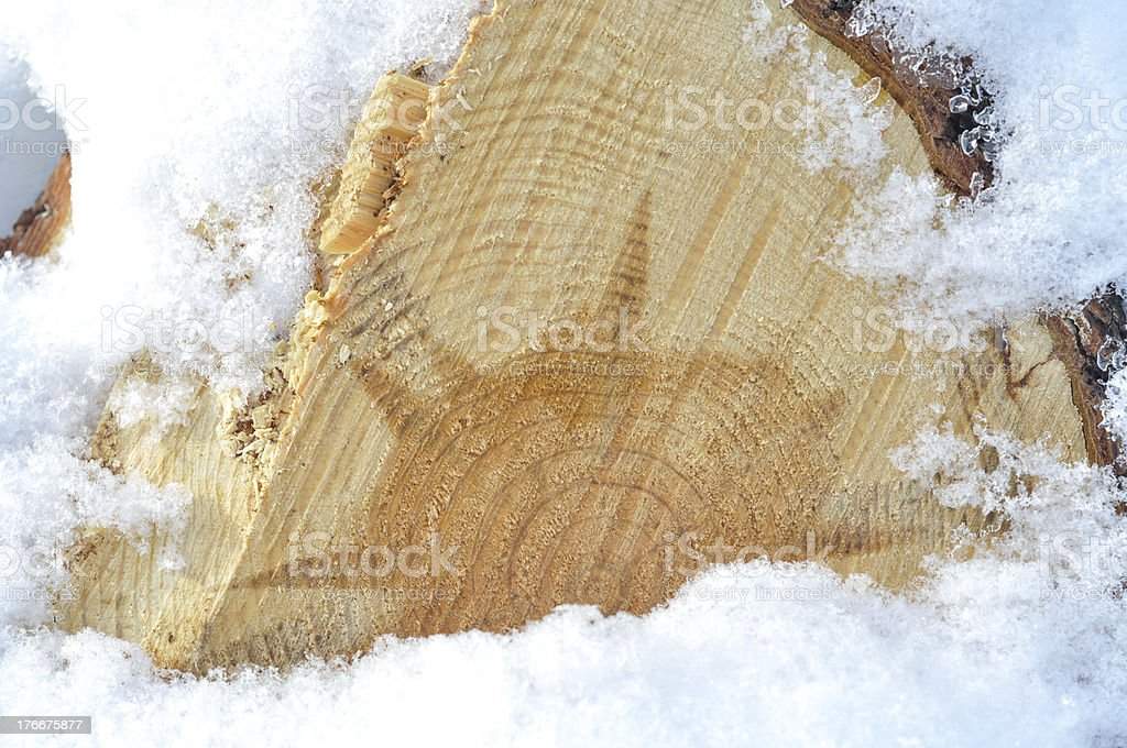 Pile of wood in forest royalty-free stock photo
