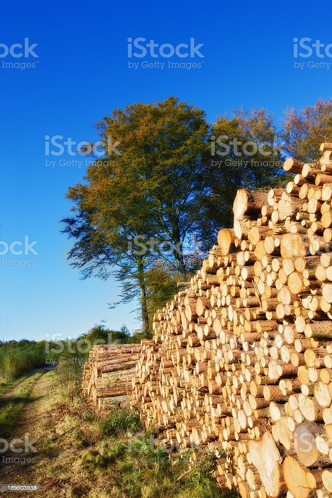 Pile of wood in the countryside stock photo