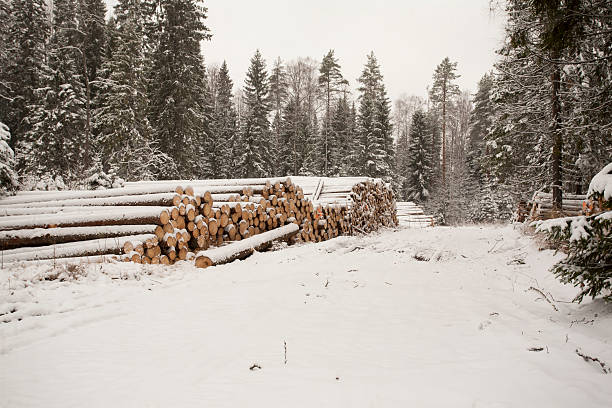 Pile of Wood Logs in Snow stock photo