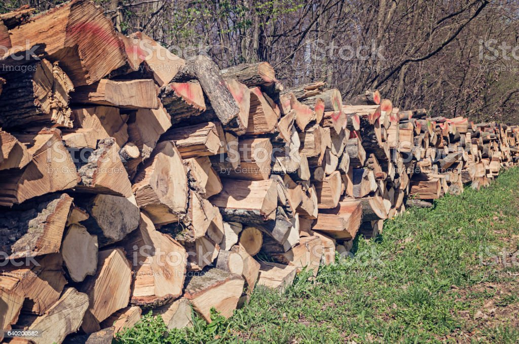 Pile of wood logs on the edge of the forest stock photo
