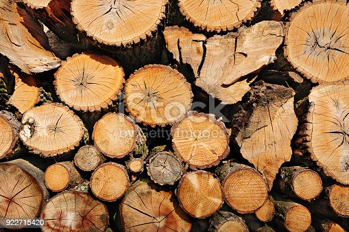 istock Pile of wooden logs, sawn ends view 922715420