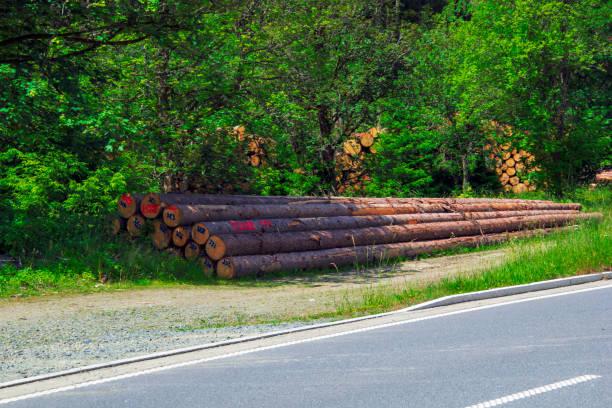 Holzhandel Deutschland Bilder Und Stockfotos Istock