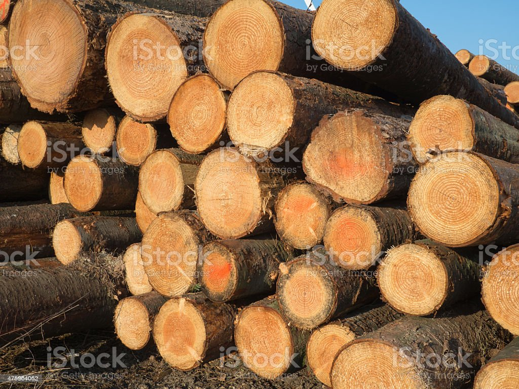 pile wood logs stock photo