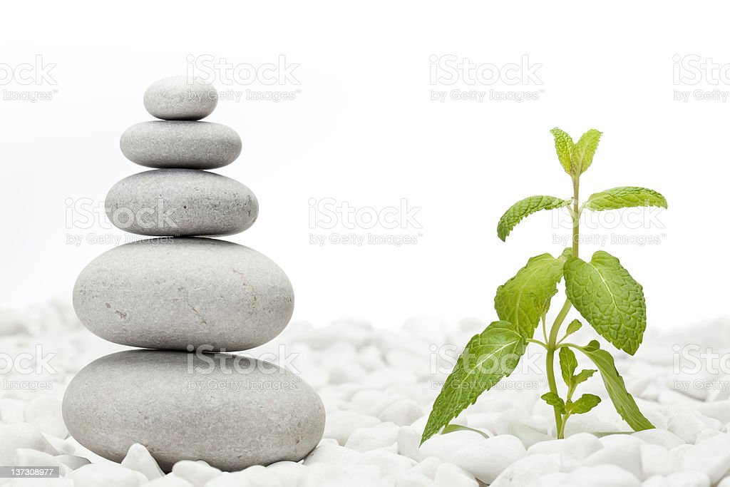 Piled pebble stones and mint plant royalty-free stock photo