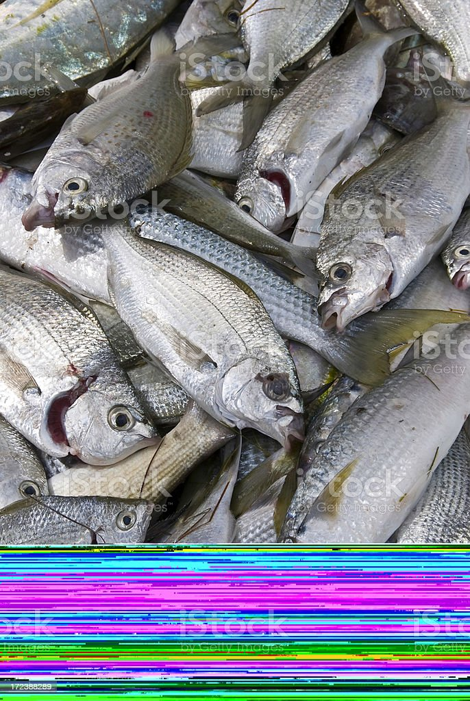 Piles of dead fish with a line of colors stock photo