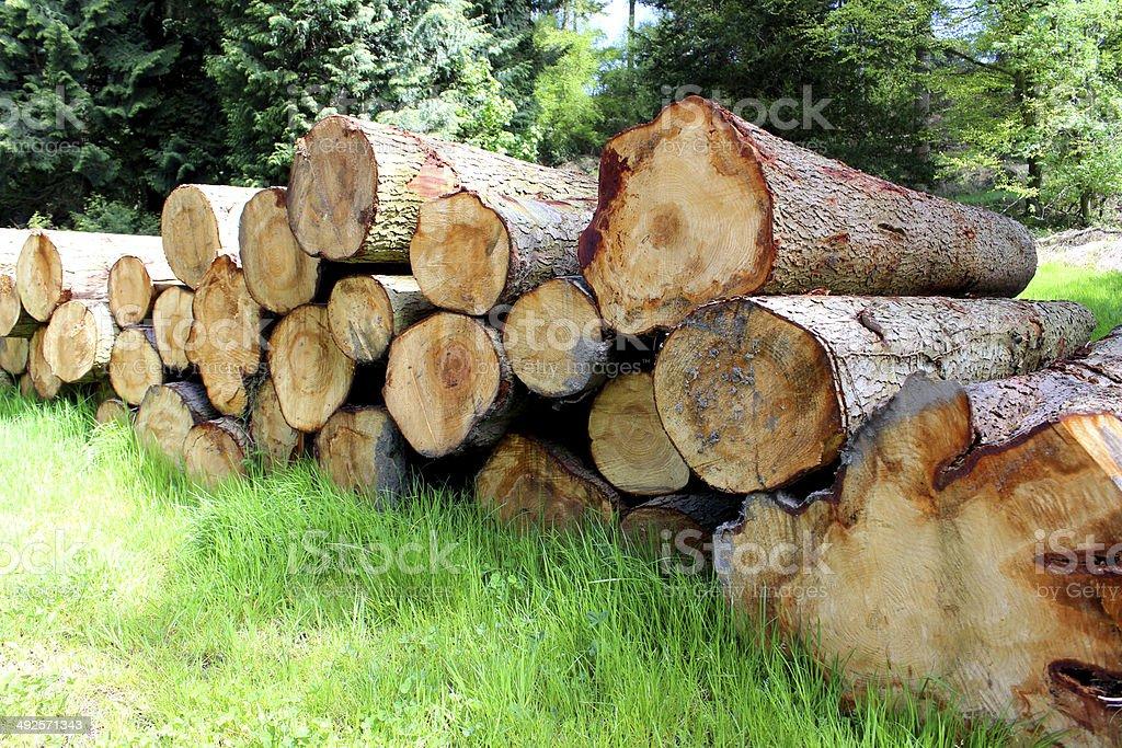 Piles of logs, felled tree trunks at lumber / timber yard stock photo
