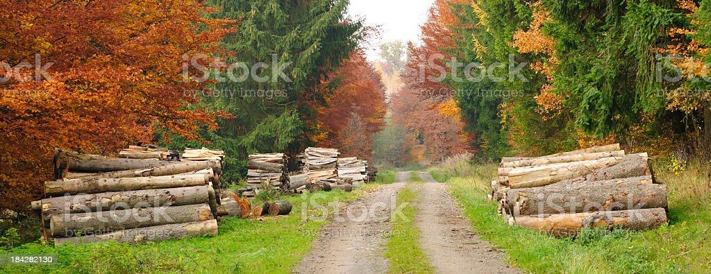 Piles of Lumber along Road through Mixed Forest in Fall royalty-free stock photo