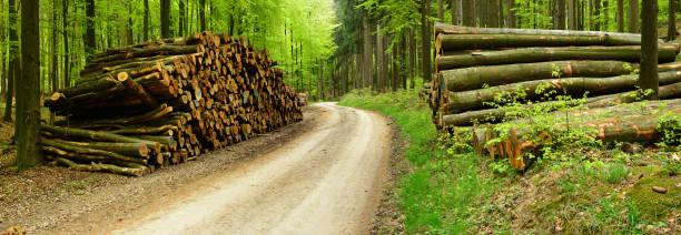 Haufen von Holz entlang der kleinen Straße Trog Mixed Forest – Foto
