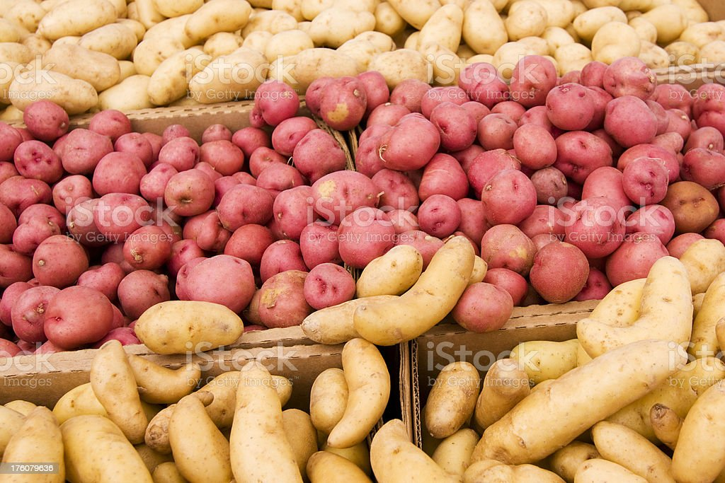 Piles of Potatoes royalty-free stock photo