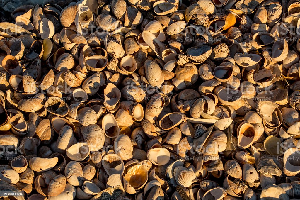 Piles of shells on the beach at Milford Point, Connecticut. stock photo