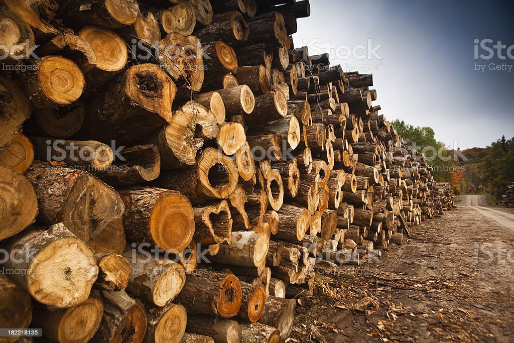 Piles of wood by a lumber mill royalty-free stock photo