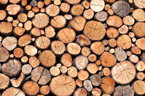 piles of wood stacked and cut logs log stock pictures, royalty-free photos & images