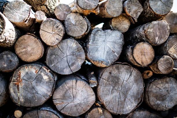 Piles of wood stock photo