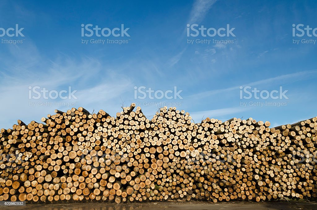 Piles of wooden logs under blue sky foto royalty-free
