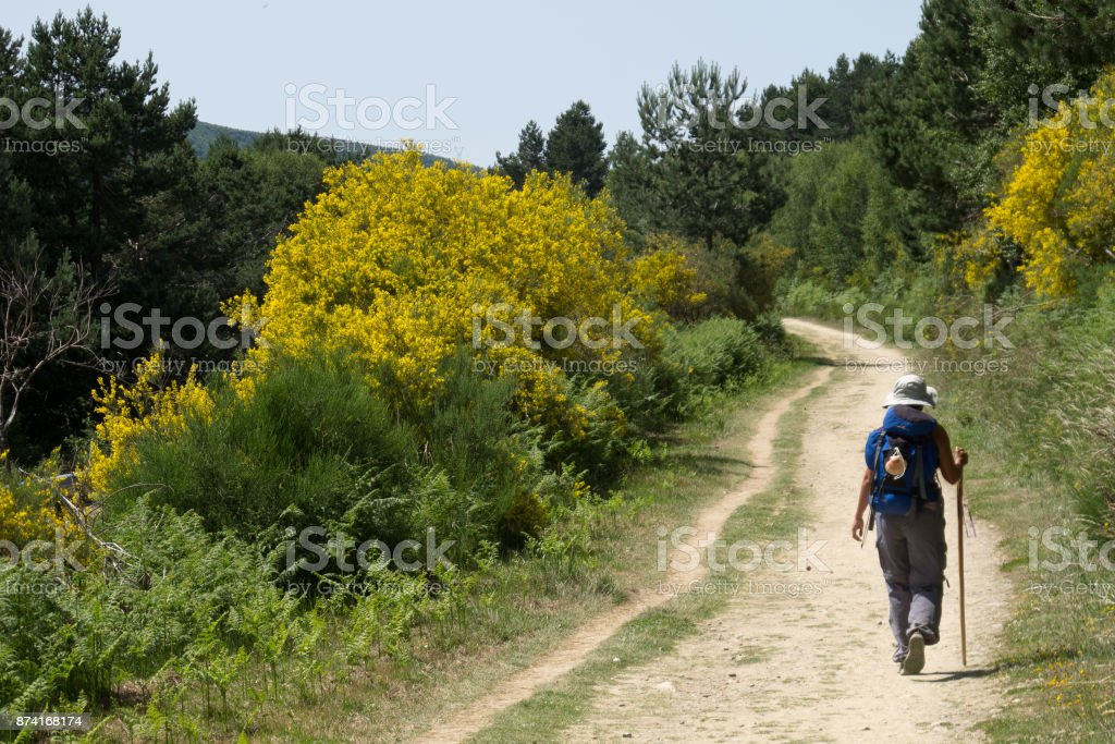 Pilgrim walking to Compostela on the french Way of St James (Camino de Santiago) stock photo