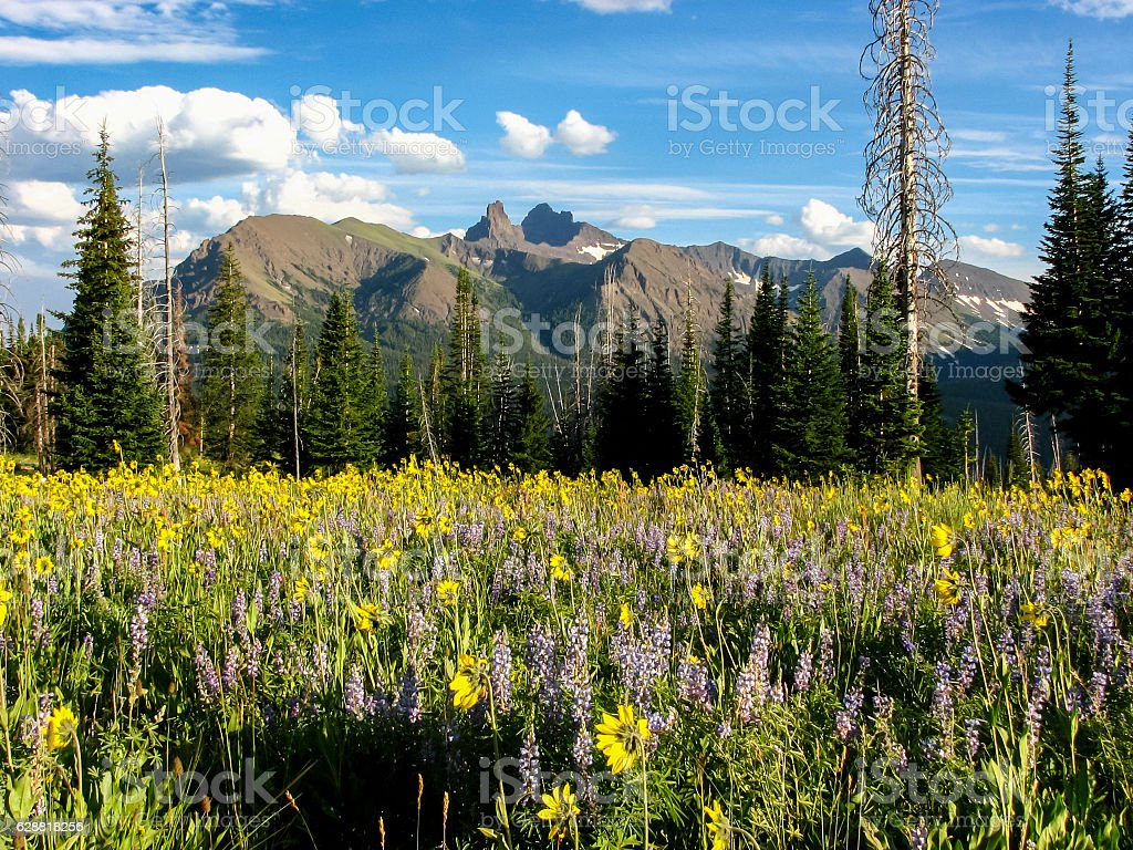 Pilot and Index Peaks with wildflowers stock photo
