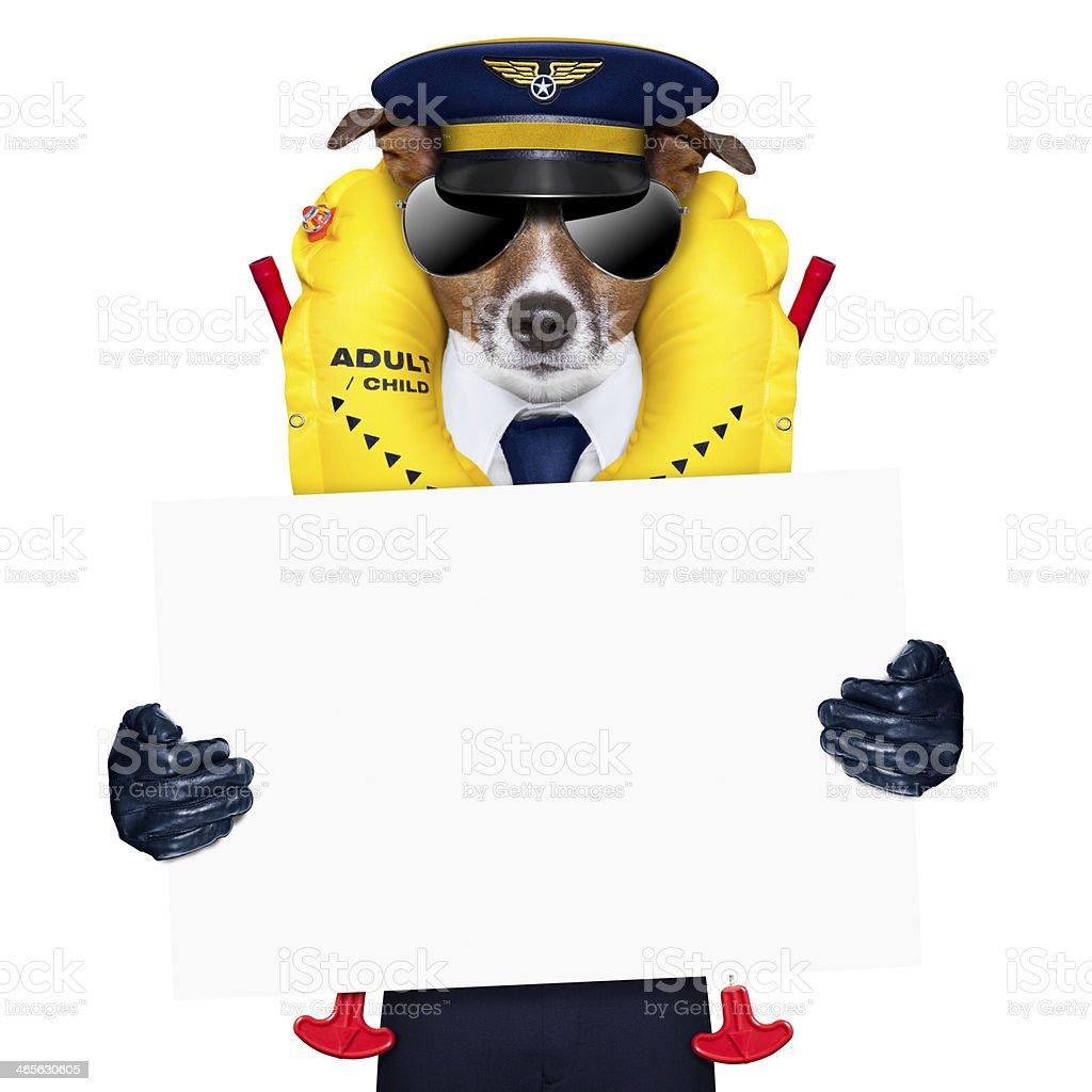 pilot dog royalty-free stock photo