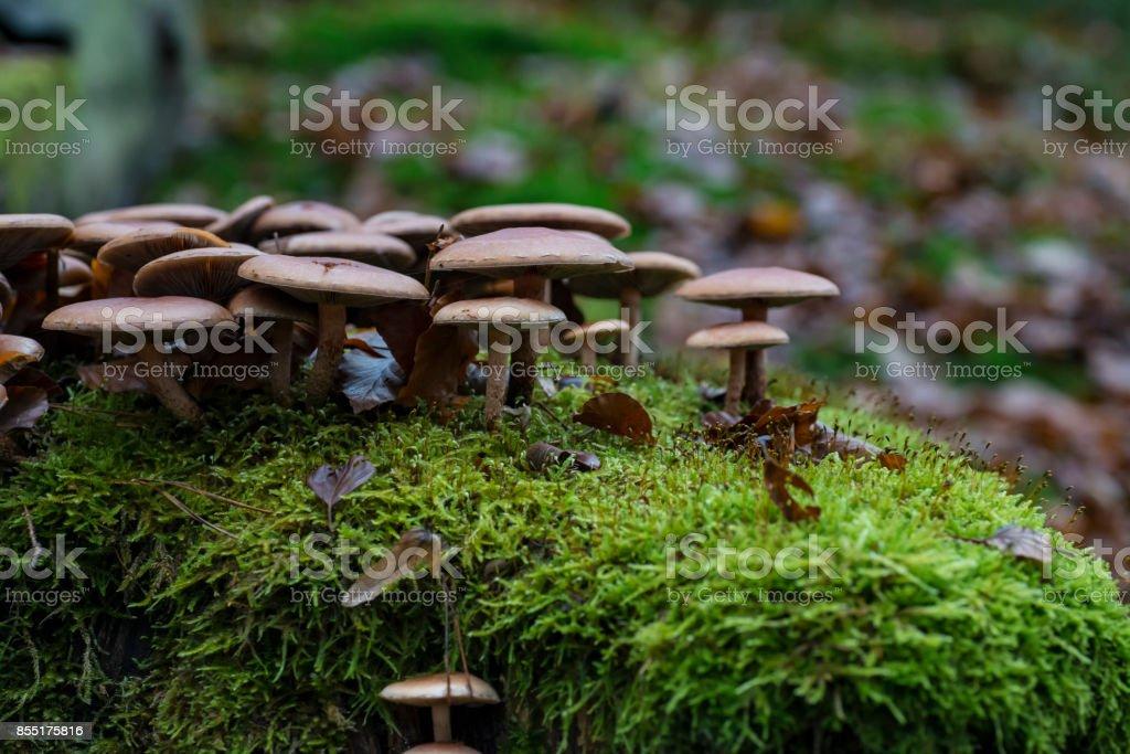Pilze Auf Einem Baumstumpf Mit Moos. – Foto