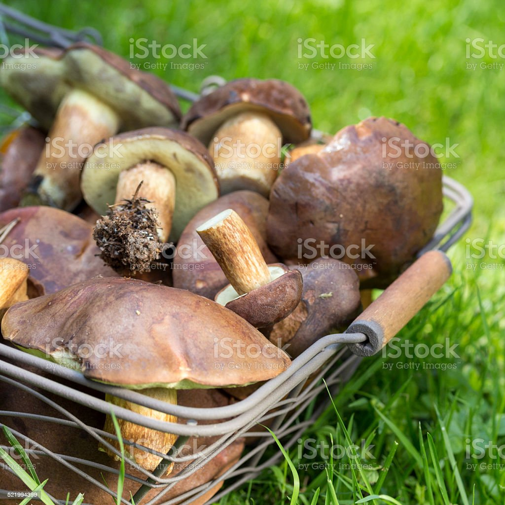 Pilzernte stock photo