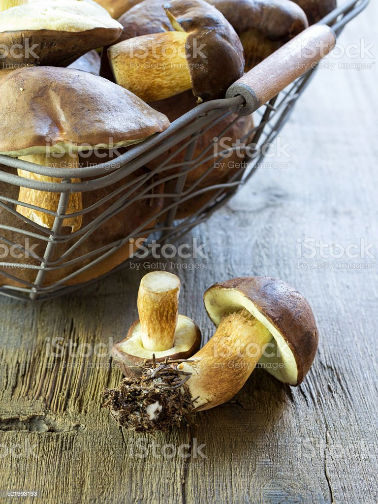 Pilzsaison stock photo