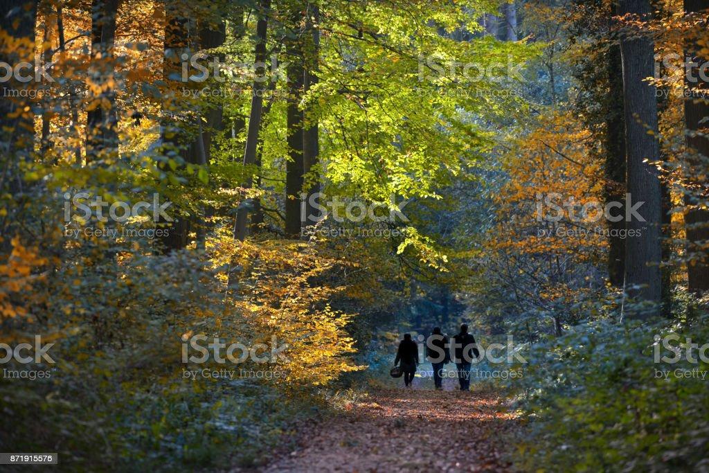 Pilzsammler im Herbst stock photo