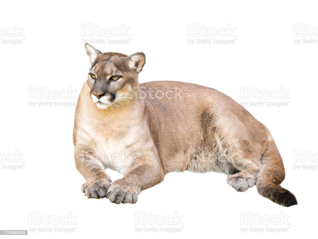 Maman cougar délaissée, de Limoges, en plan à 3 avec les voisins