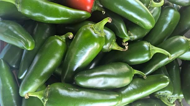 Pimenta Jalapeño Jumbo stock photo