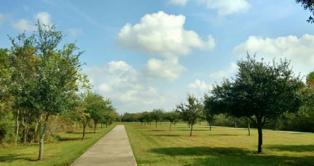 Pin Oaks along the Park Path stock photo