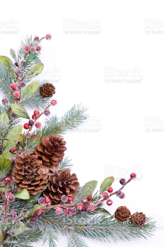 Pine and Berries (XXL) royalty-free stock photo