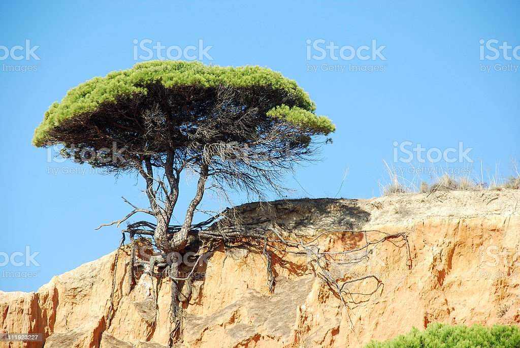 Pine and red cliffs (Algarve,Portugal) stock photo