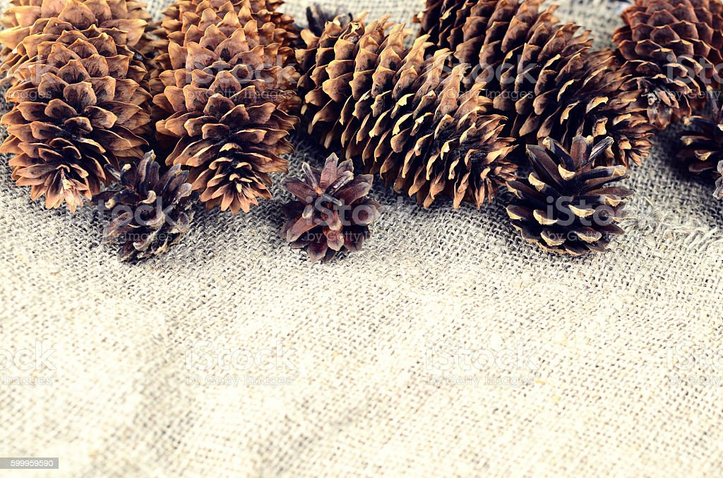 Pine and spruce cones on sackcloth stock photo