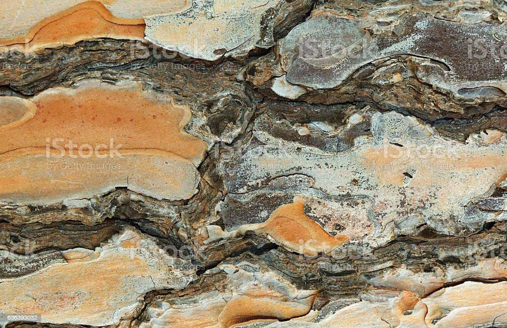 pine bark close up stock photo