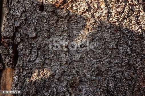 istock Pine bark close up texture 1130126508
