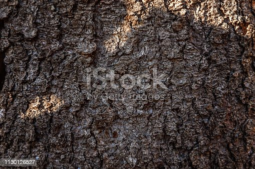 istock Pine bark close up texture 1130126527