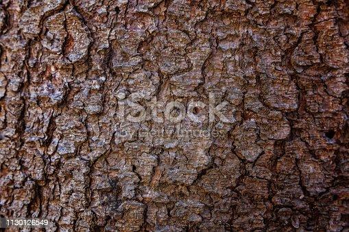 istock Pine bark close up texture 1130126549