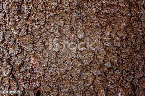 istock Pine bark close up texture 1130126579