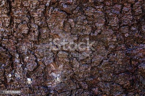 istock Pine bark close up texture 1130126599