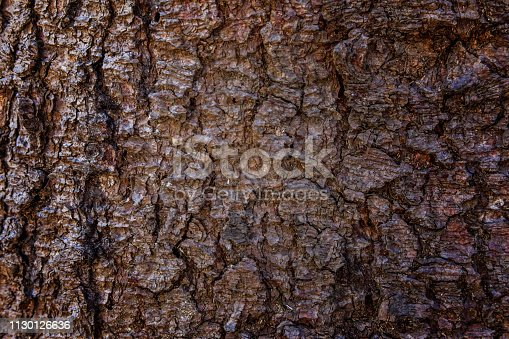 istock Pine bark close up texture 1130126636