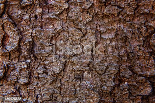 istock Pine bark close up texture 1130126658
