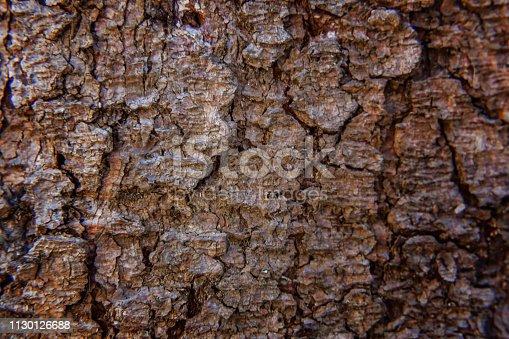 istock Pine bark close up texture 1130126688