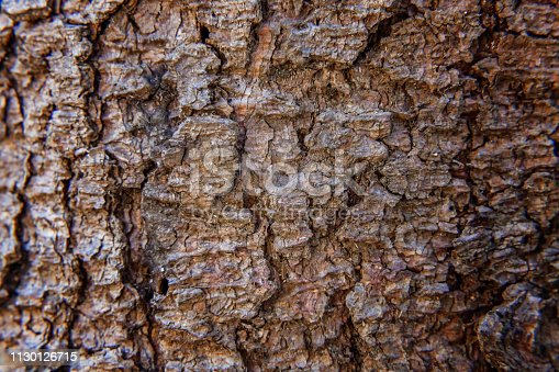 istock Pine bark close up texture 1130126715