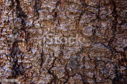 istock Pine bark close up texture 1130126739