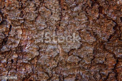 istock Pine bark close up texture 1130126743