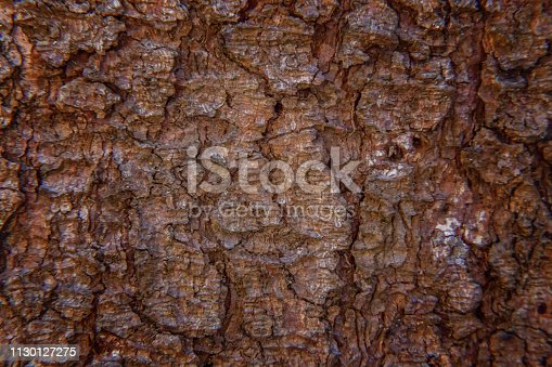istock Pine bark close up texture 1130127275