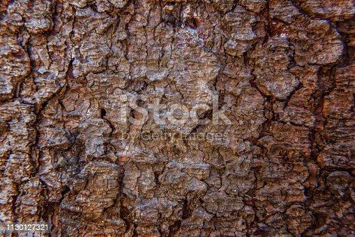istock Pine bark close up texture 1130127321
