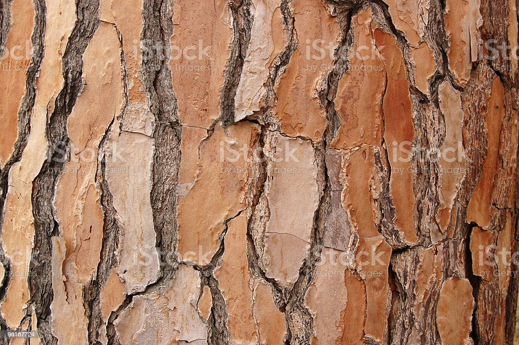 Pine bark royalty-free stock photo