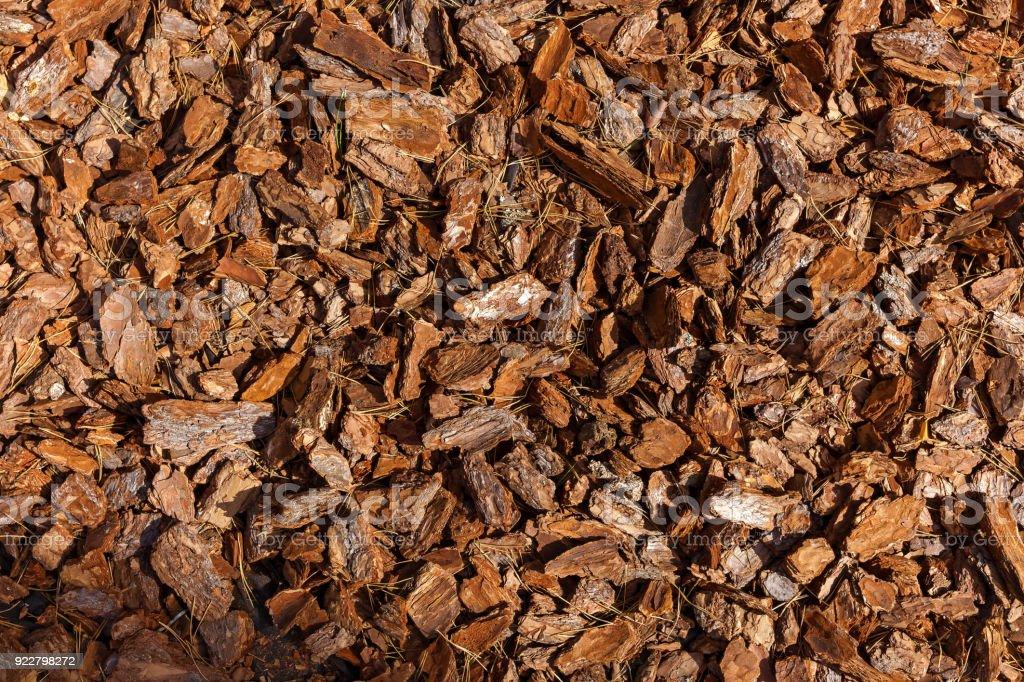 pine bark texture stock photo