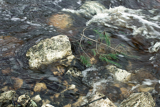 pine branch among the rocks and water stock photo
